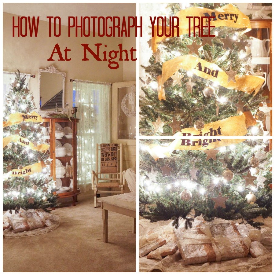 how to photograph a tree at night