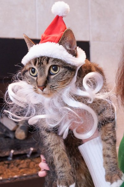 Santa Claws The Cat That Saved Christmas